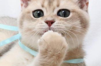 Заводим кота, что нужно знать?