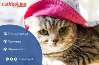 Наш новый партнёр BookingCat