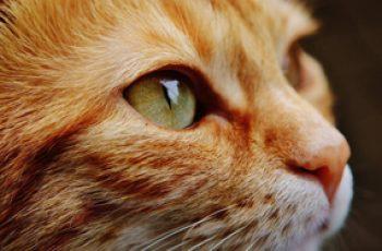 Заводим кота, как избежать ненужных проблем?
