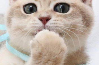 Кошки любят тишину